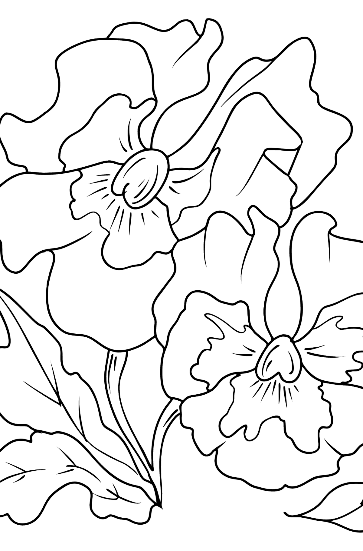 Flower Coloring Page - Pansies - Coloring Pages for Kids