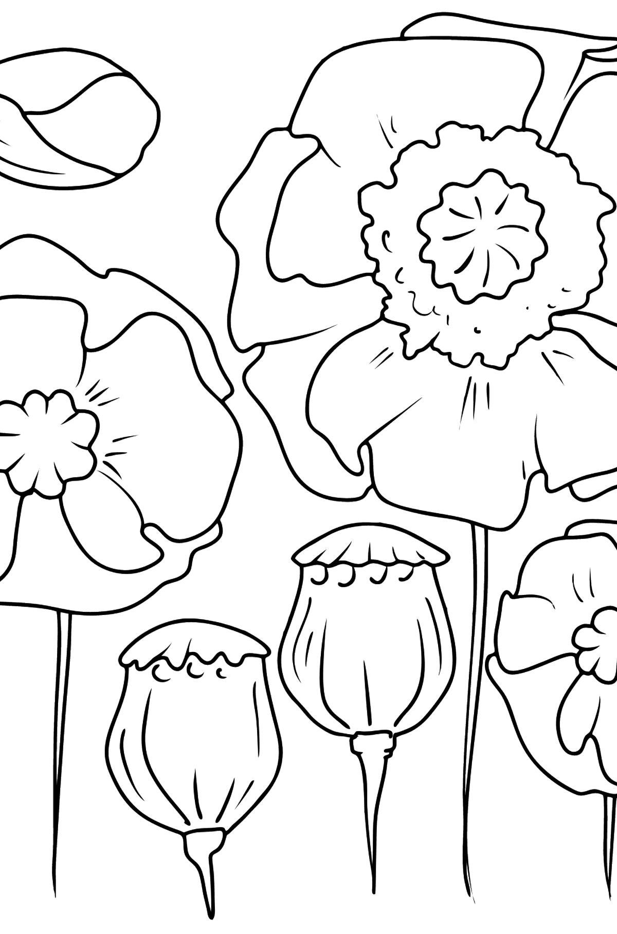 Flower Coloring Page - Poppies - Coloring Pages for Kids