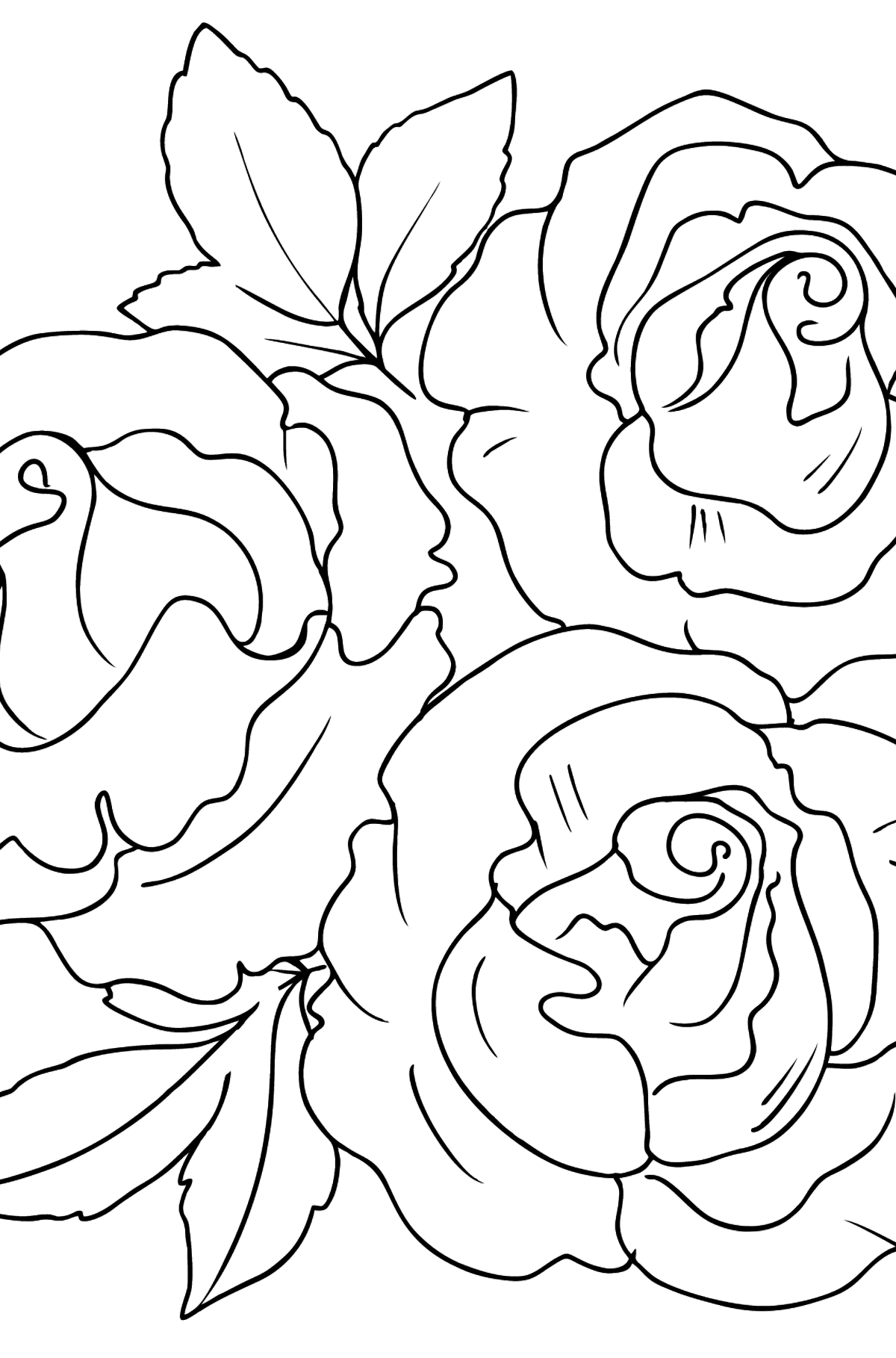 Roses Coloring Page - Coloring Pages for Kids