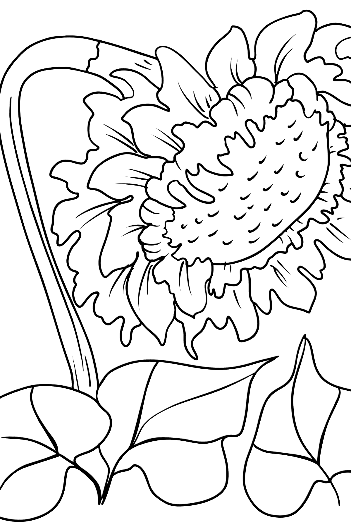 Sunflower Coloring Page - Coloring Pages for Kids