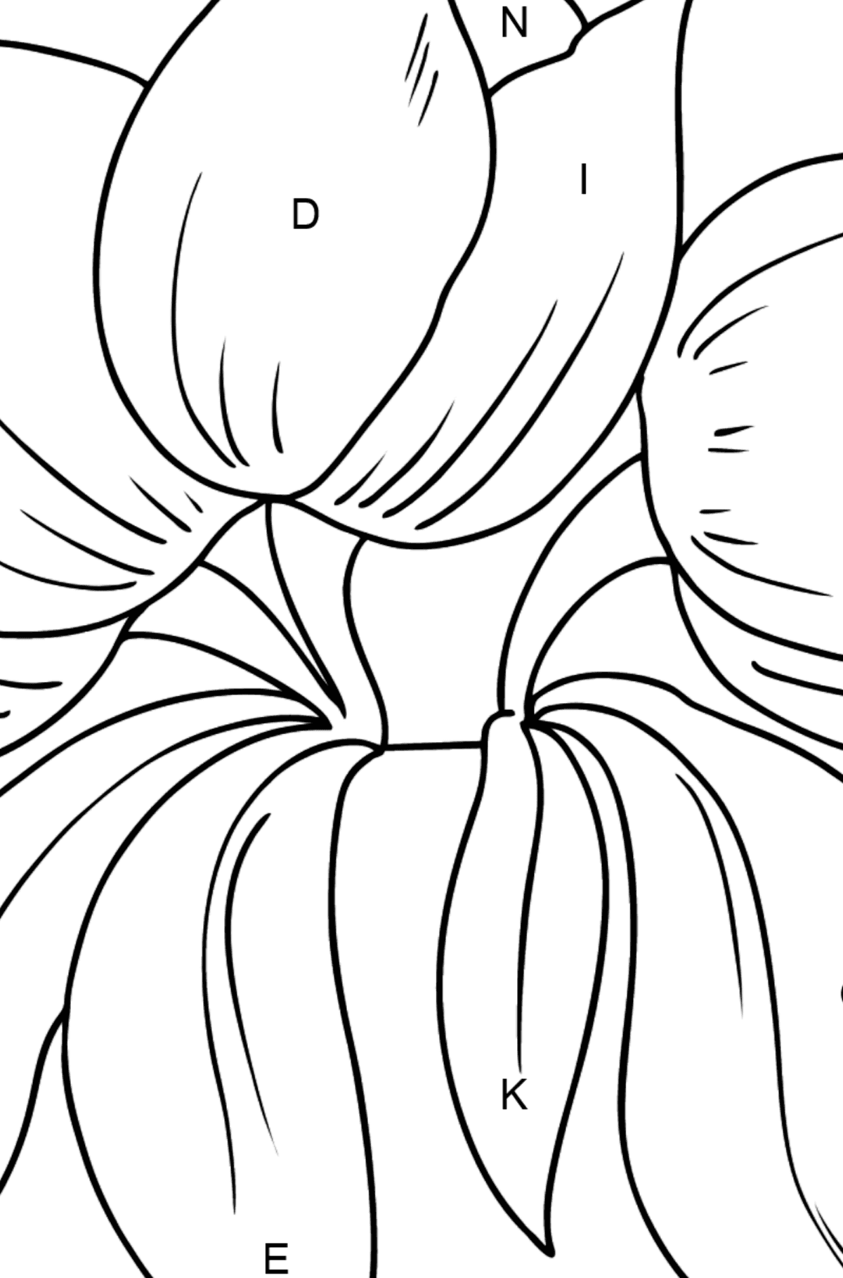 Flower Coloring Page - Tulips - Coloring by Letters for Kids