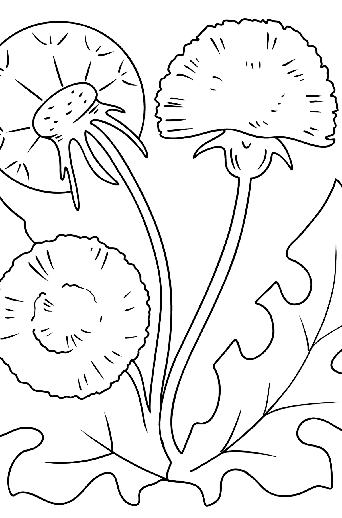 Dandelion Coloring Page - Coloring Pages for Kids