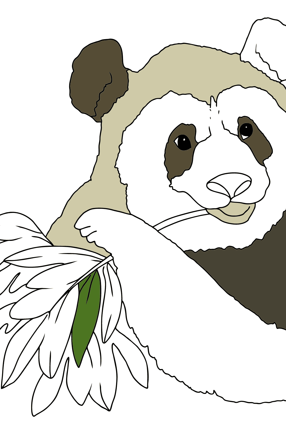 Coloring Page - A Panda is Eating Bamboo Leaves - Coloring Pages for Children