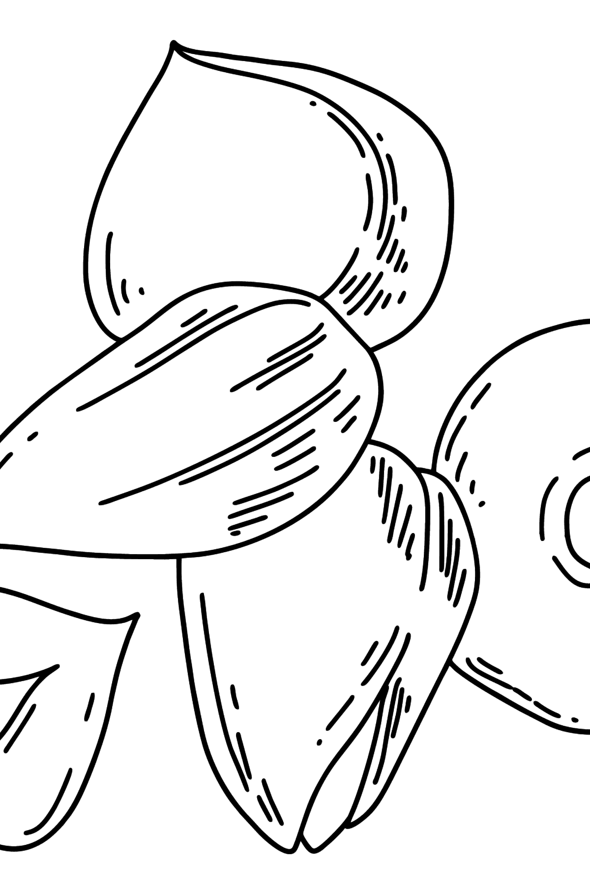 Nuts coloring page - Coloring Pages for Kids
