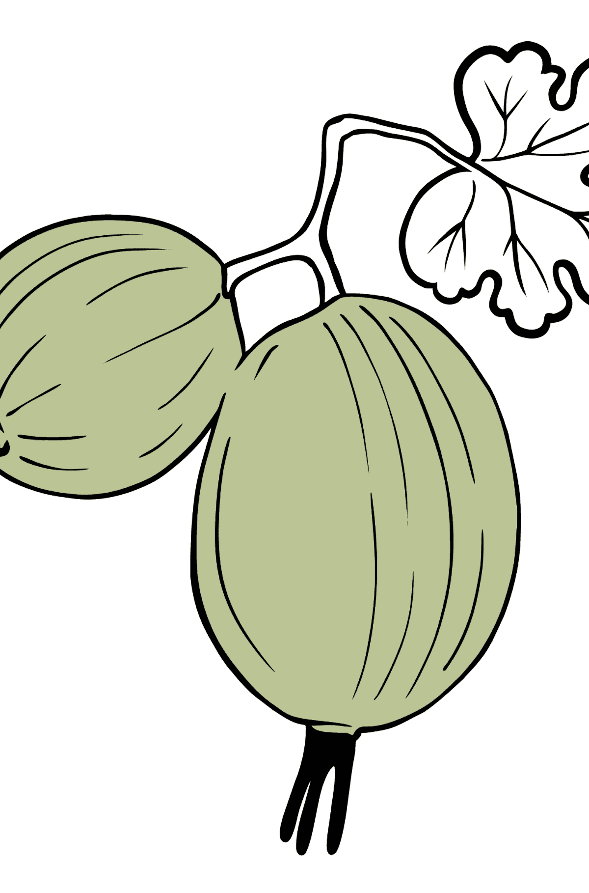 Gooseberry coloring page - Coloring Pages for Kids