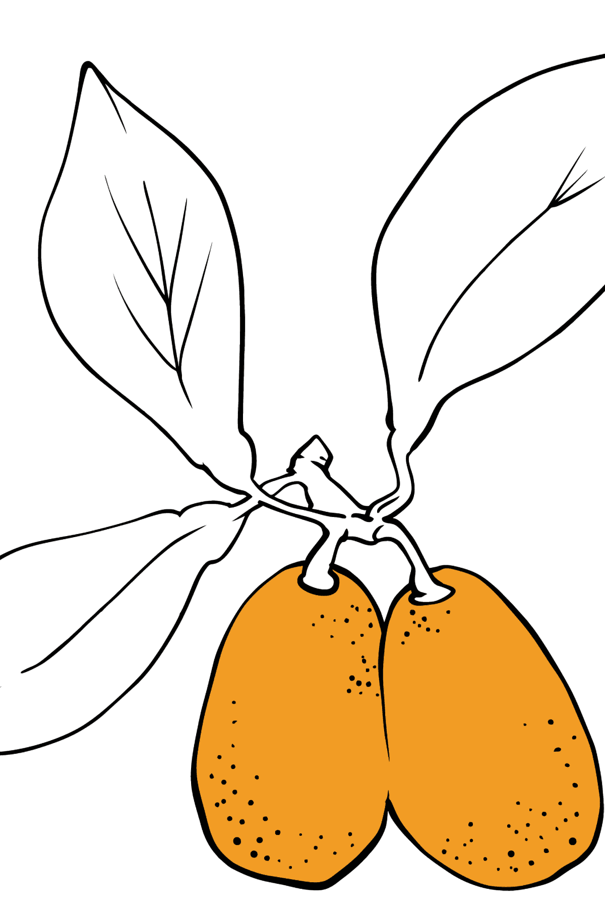 Kumquat coloring page - Coloring Pages for Kids