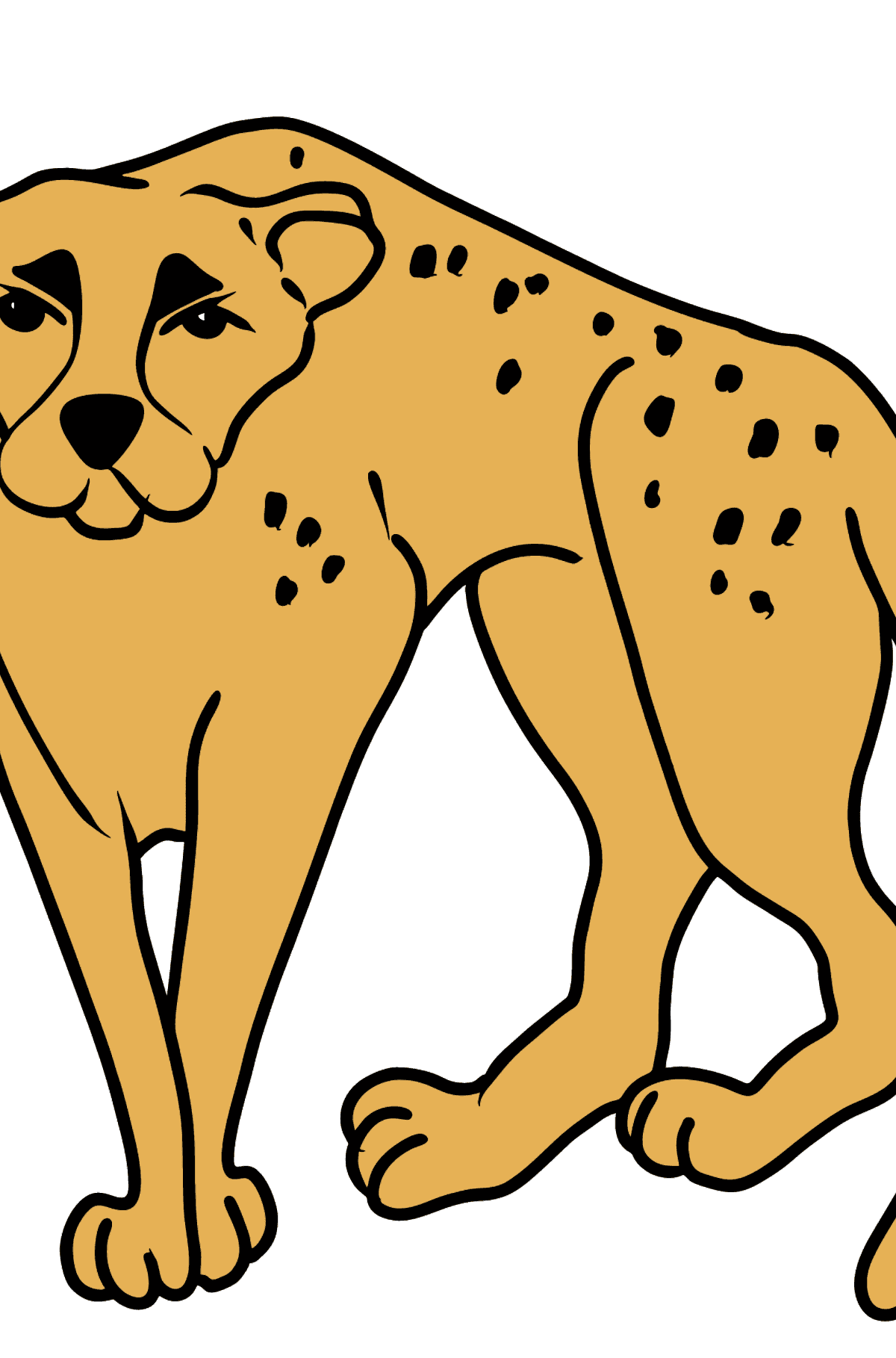 Cheetah coloring page - Coloring Pages for Kids
