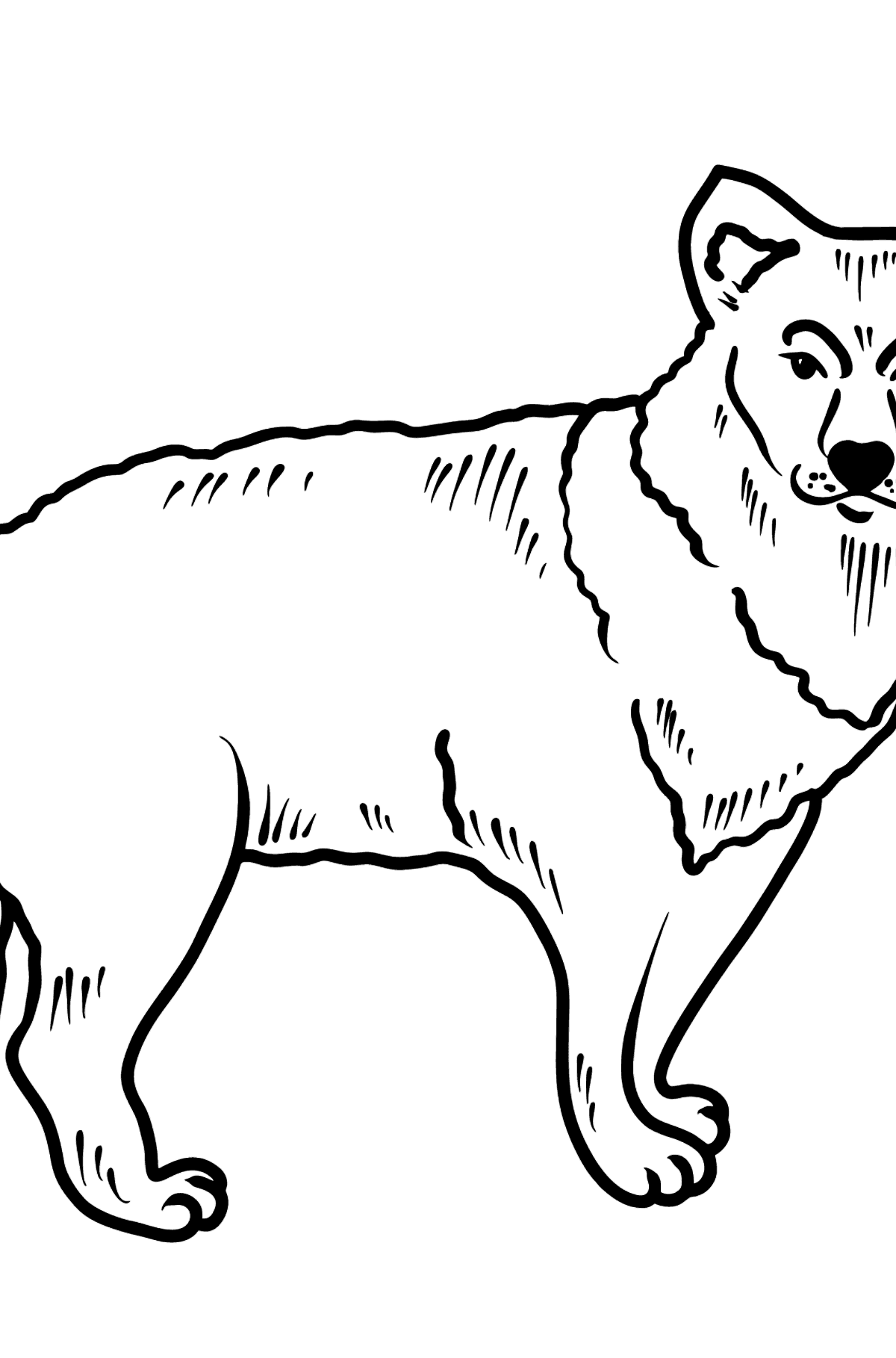 Coyote coloring page - Coloring Pages for Kids