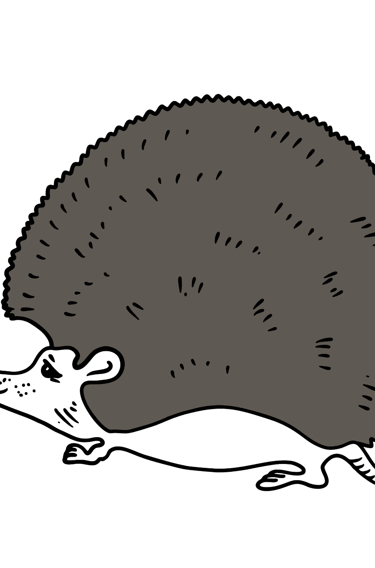 Hedgehog coloring page - Coloring Pages for Kids