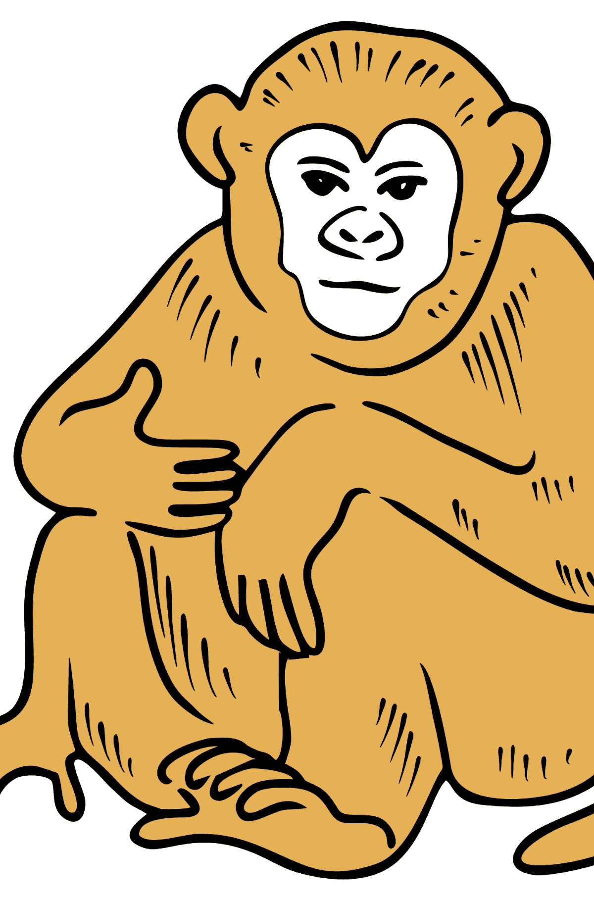 Monkey coloring page - Coloring Pages for Kids