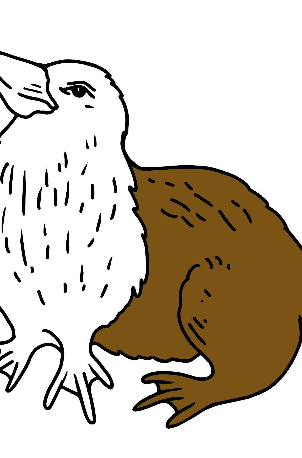 Platypus coloring page - Coloring Pages for Kids