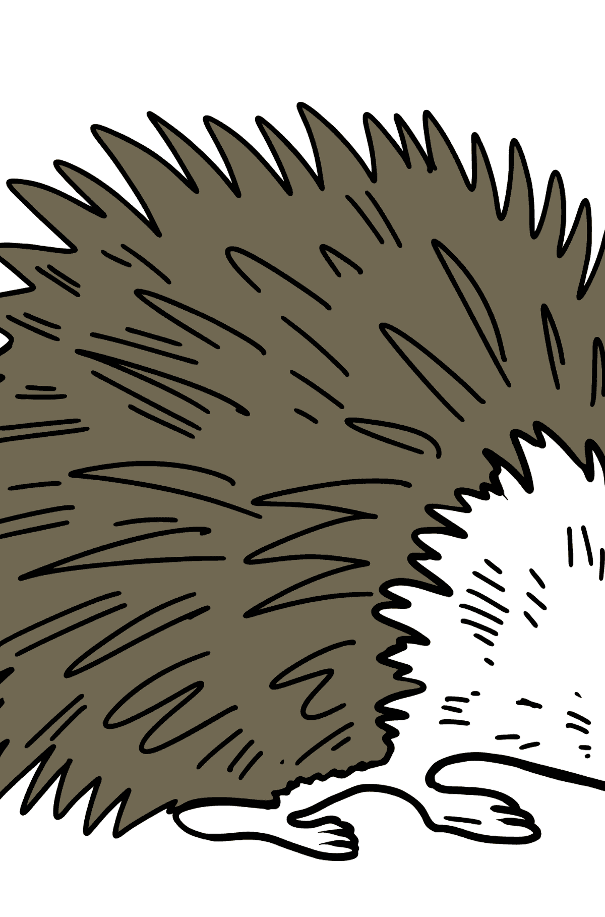Porcupine coloring page - Coloring Pages for Kids