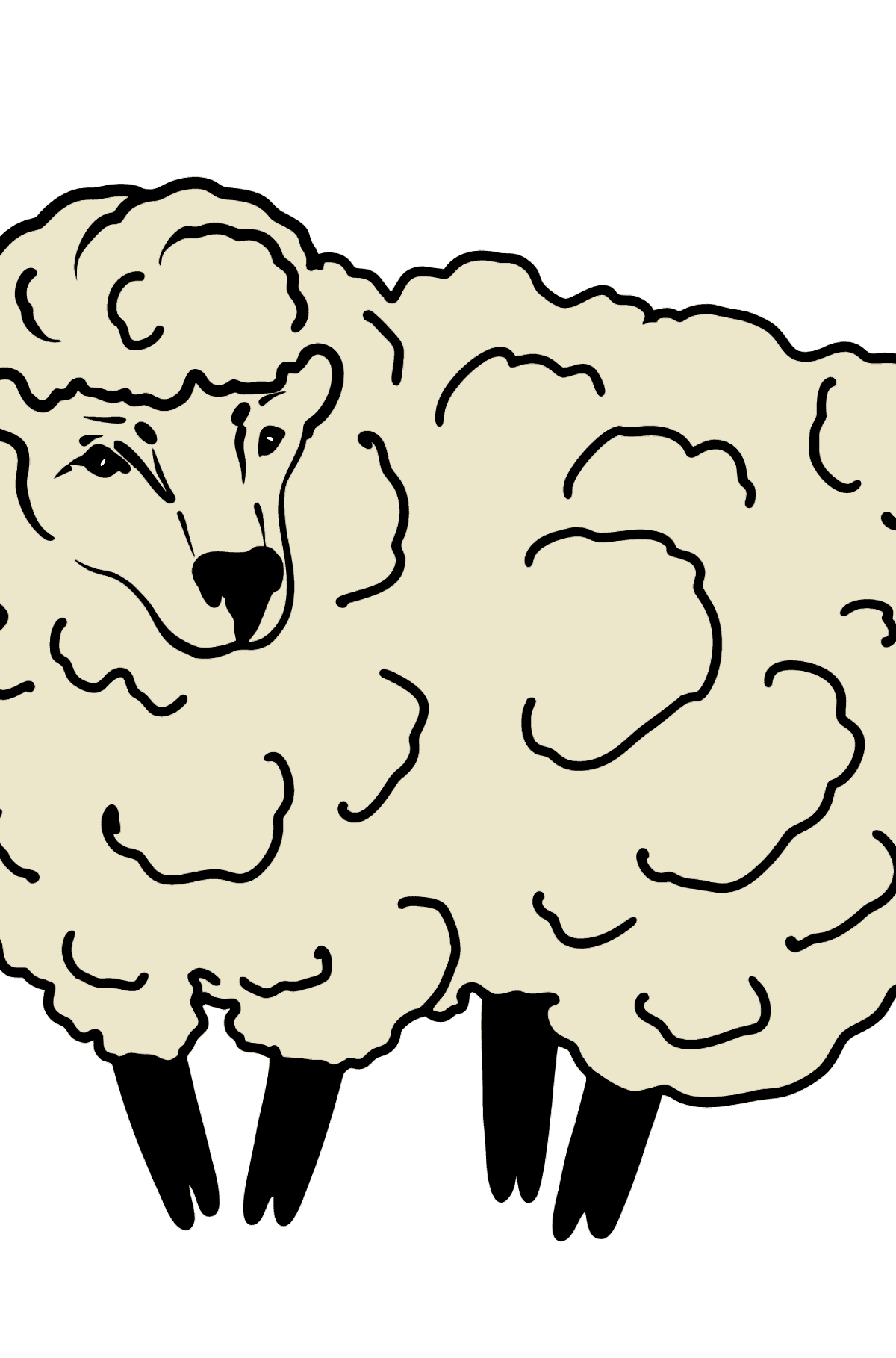 Sheep coloring page - Coloring Pages for Kids