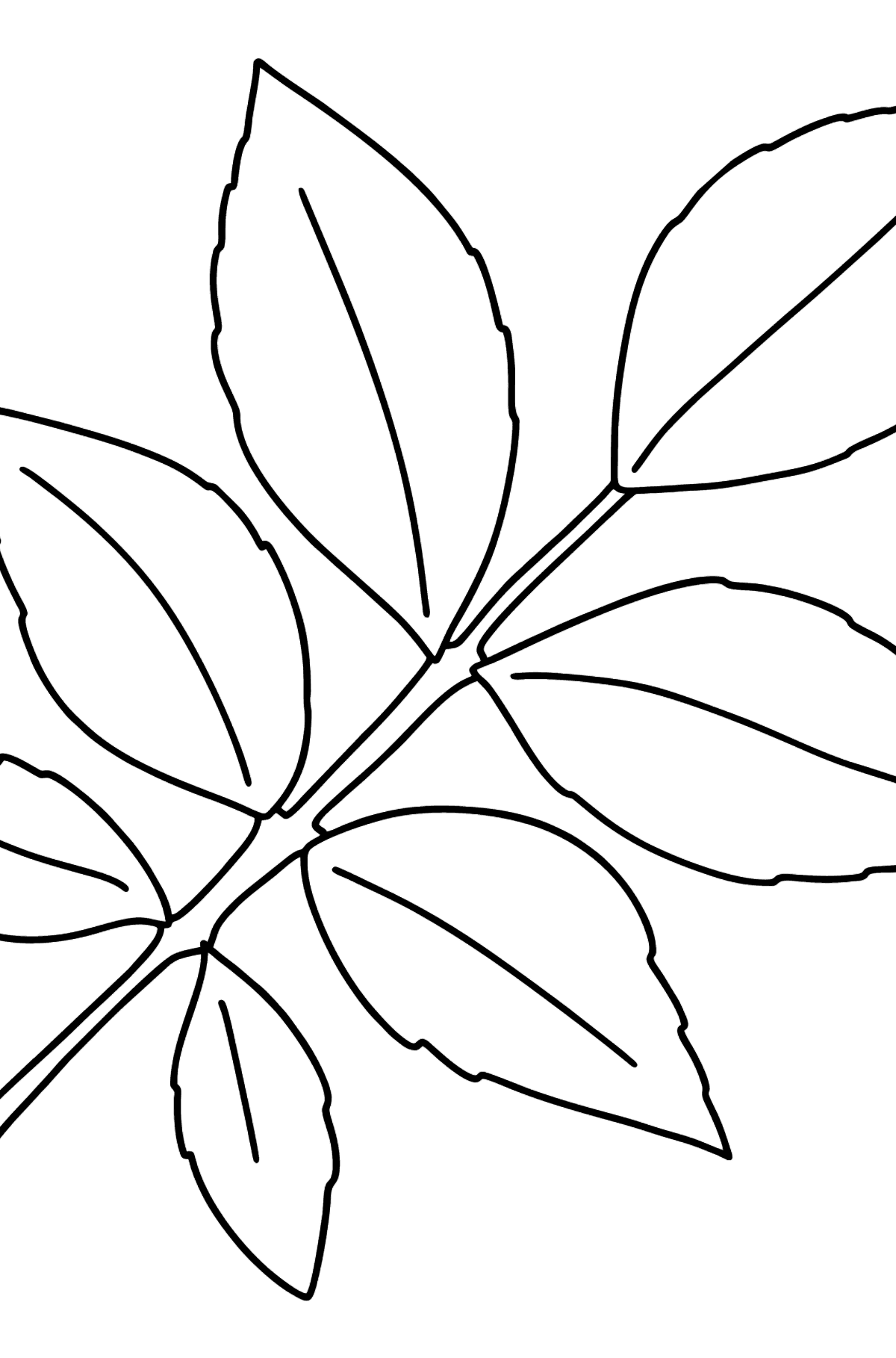 Ash Leaf coloring page - Coloring Pages for Kids