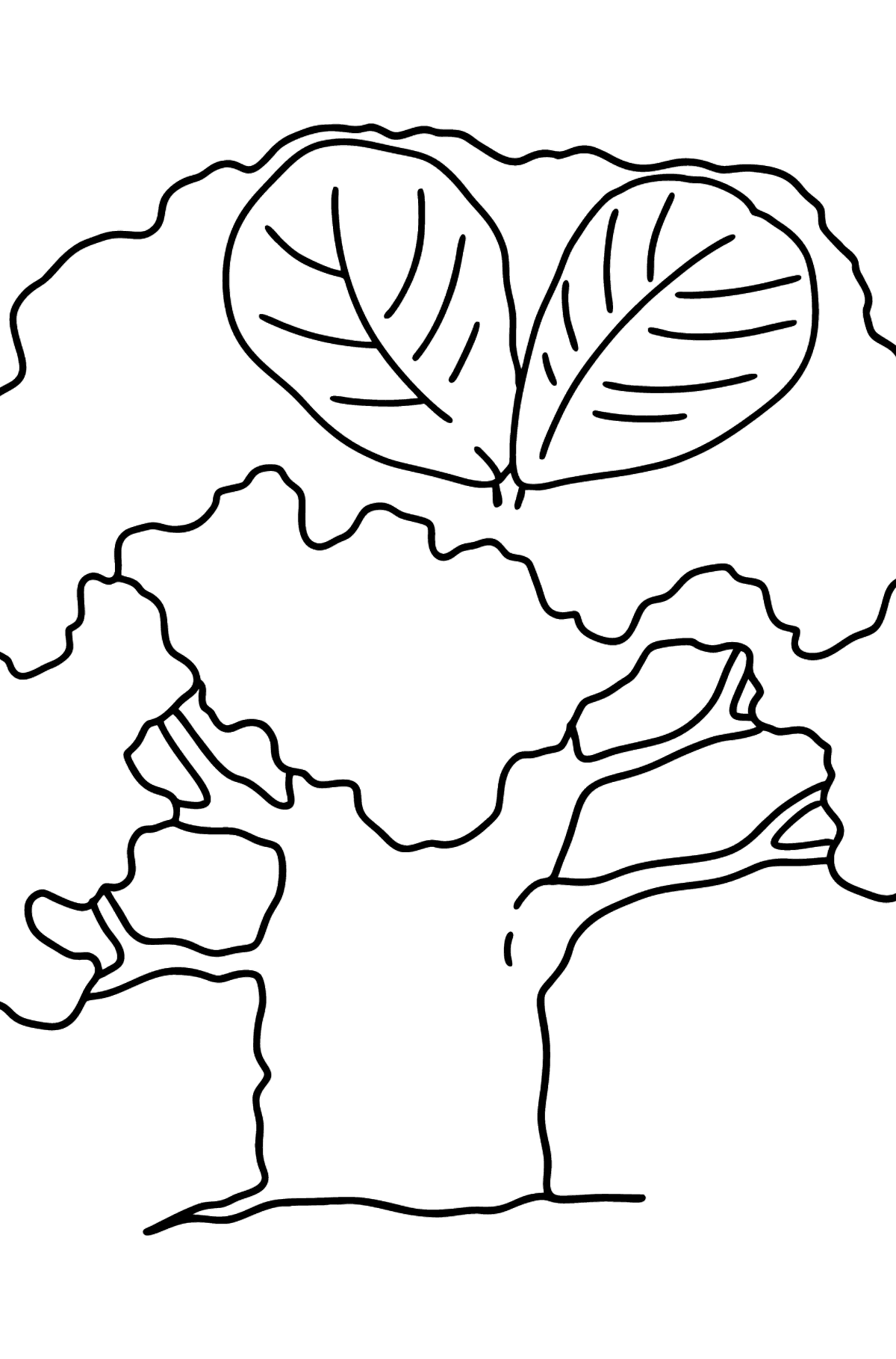Beech coloring page - Coloring Pages for Kids