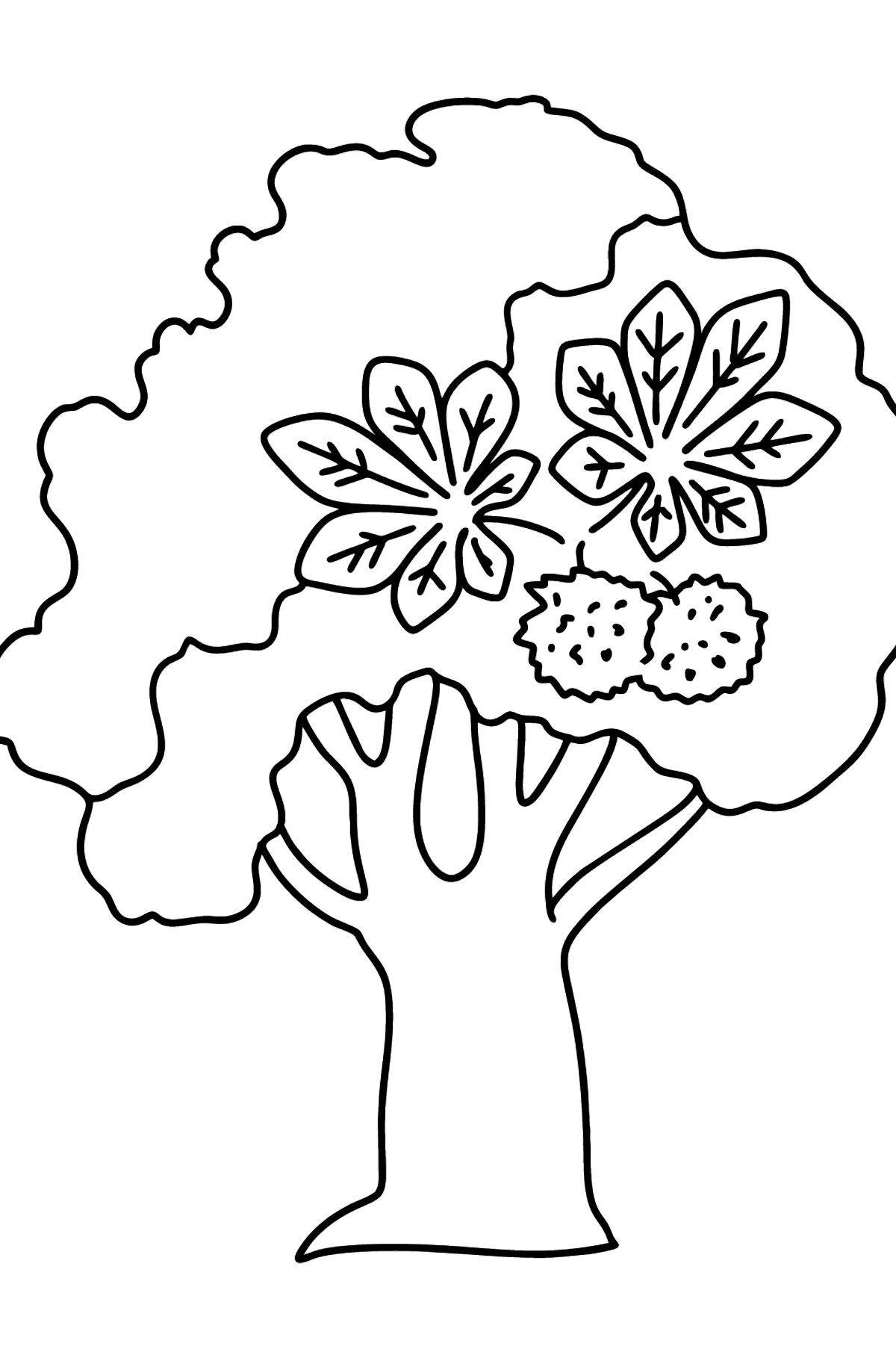 Chestnut coloring page - Coloring Pages for Kids