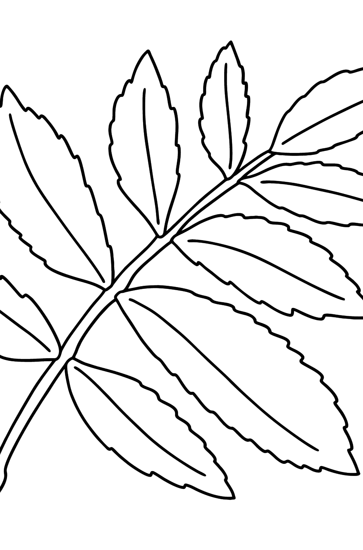 Sumac Tree Leaf coloring page - Coloring Pages for Kids
