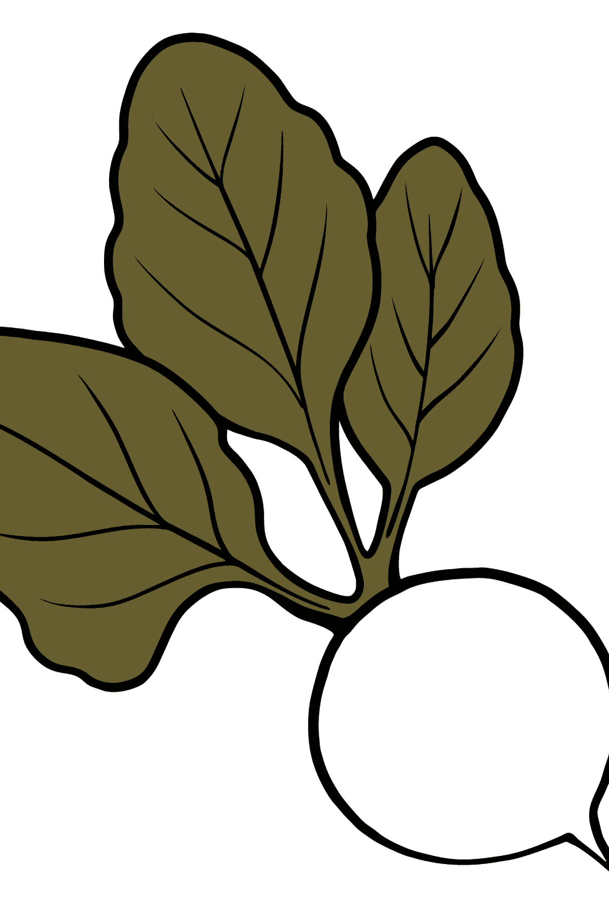 Beet coloring page - Coloring Pages for Kids