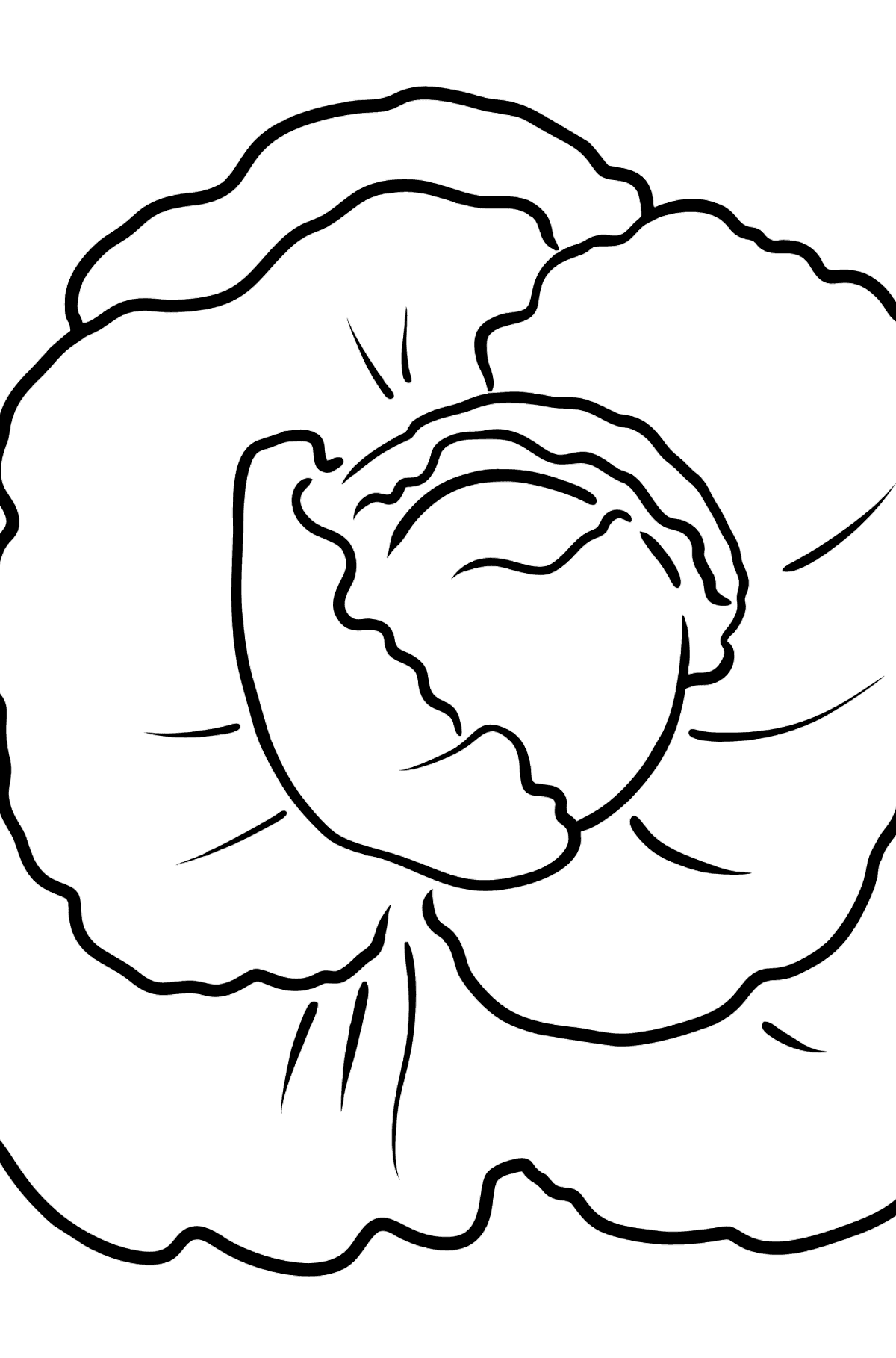 White Cabbage coloring page - Coloring Pages for Kids